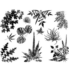 Grunge plant elements vector