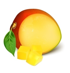 Ripe fresh mango with slices vector