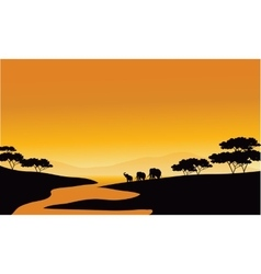 Family elephant of silhouette in the river vector image