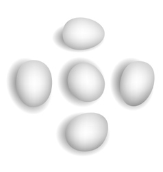 5 different photorealistic white chicken eggs vector