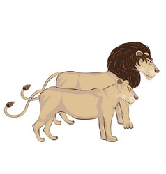 Couple of lions vector