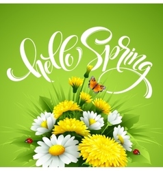 Inscription Hello Spring Hand Lettering on vector image