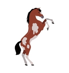 Rearing Pinto Horse in Flat Design vector image vector image