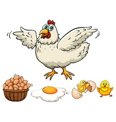 Chicken and eggs in basket vector
