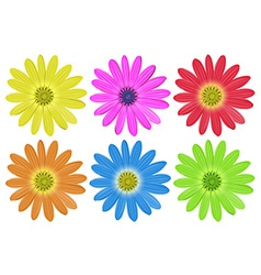 Colourful flowers vector image
