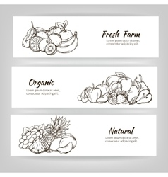 hand draw fruits banner vector image vector image