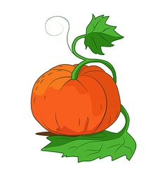 Ripe pumpkin with leaves vector