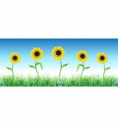Sunflower on green field vector