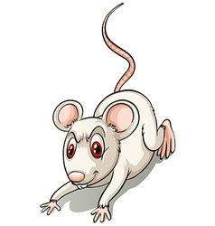 Angry small mouse vector