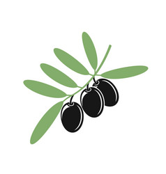 olive vector image vector image
