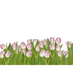 Pink tulips isolated on white EPS 10 vector image