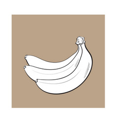 Bunch of three unopened unpeeled ripe bananas vector
