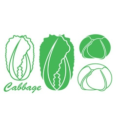 Cabbage chinese cabbage vector