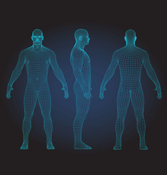Set of 3d wire frame human body vector
