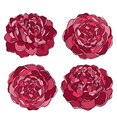 Set of beautiful flower isolated on white vector