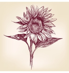 sunflower hand drawn llustration realistic sketch vector image vector image