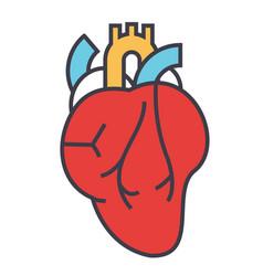 Heart anatomy cardiology concept line vector