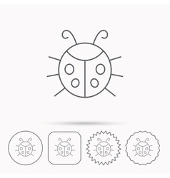 Ladybug icon ladybird insect sign vector