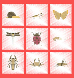assembly flat shading style bug snail butterfly vector image vector image