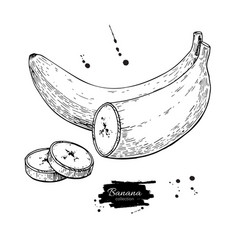 Banana color artb vector