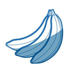 Banana fruit delicious nutrition image vector