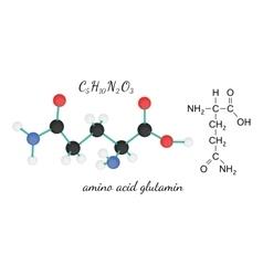 C5H10N2O3 glutamine amino acid molecule vector image vector image