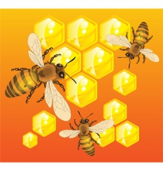 bees vector image
