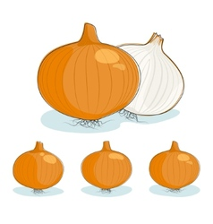 Onion on a white background vector image vector image