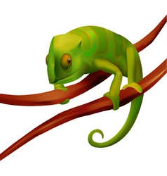 Green chameleon on white background vector