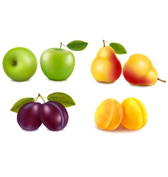Group with different sorts of fruit vector