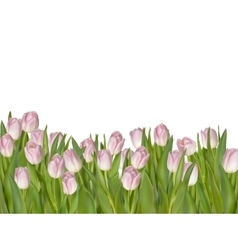 Pink tulips white background eps 10 vector