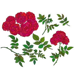 Collection of hand drawn red bush roses vector