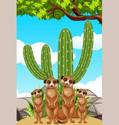Meerkats standing by the cactus plant vector