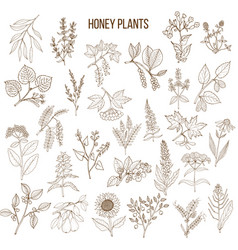 Plants - nectar sources for honey bees vector