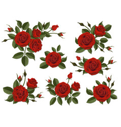 red rose boutonniere set vector image vector image