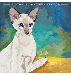 Oriental shorthair cat vector