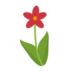 beauty flower nature decorative vector image
