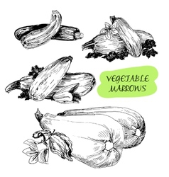 Vegetable marrows vector