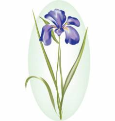 Dutch iris vector