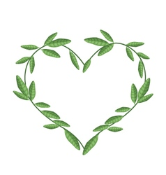 Green Vine Leaves in Beautiful Heart Shape vector image