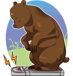 bear stepping on scale and weighing itself vector image