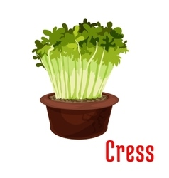 Green sprouts of cress salad cartoon icon vector image
