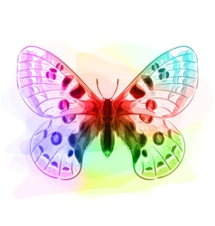Butterfly iridescen colours vector
