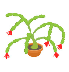 Christmas cactus icon cartoon style vector