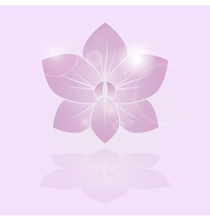 Orchid shine flower vector