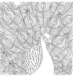 peacock coloring book vector image