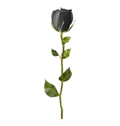 Realistic black rose eps 10 vector