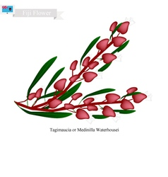 Tagimaucia Flower The National Flower of Fiji vector image vector image