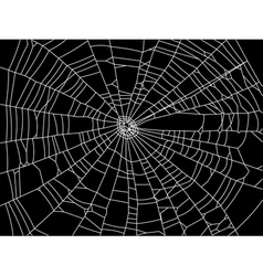 spider web resize vector image