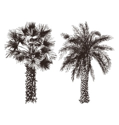 hand drawn palm trees vector image